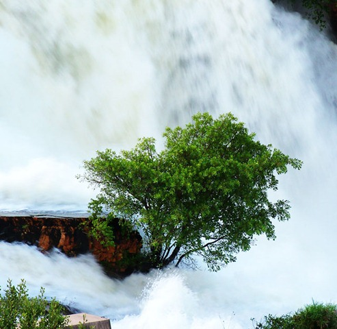 tree_in_waterval